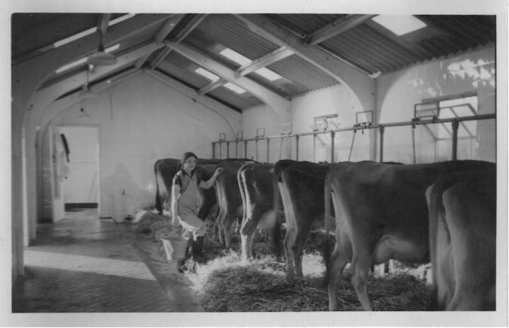 Old milking parlour and pig pens converted to modern offices